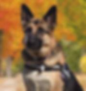 04 NOV 18 - AKC Nosework Trial - Misty 2