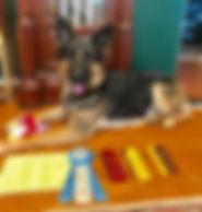 2019 - SEP 8 - AKC RATN & GSDCA TC - MIS