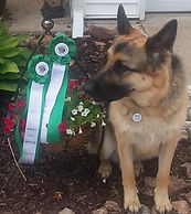 AKC SNE SWN Novice Exterior and Overall