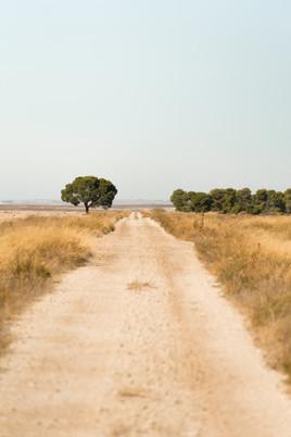 camino desierto_-15.jpg
