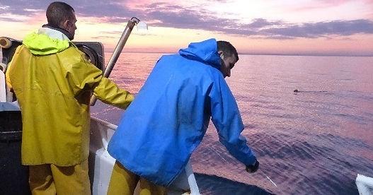 Journée de pêche au thon rouge de ligne