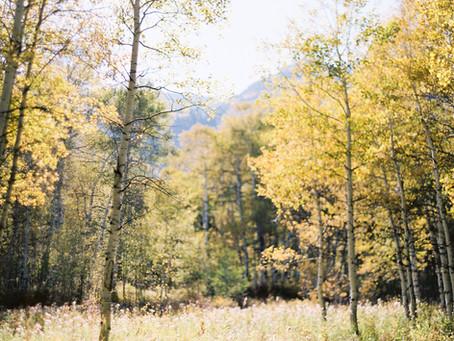 Sexual Trauma Survivorship Through the Seasons
