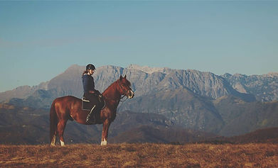 konjenica 2.jpg