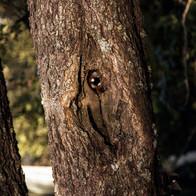 Puu-pieni.jpg