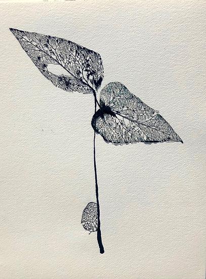 J'ai vu une fleur sauvage - Anne Damesin