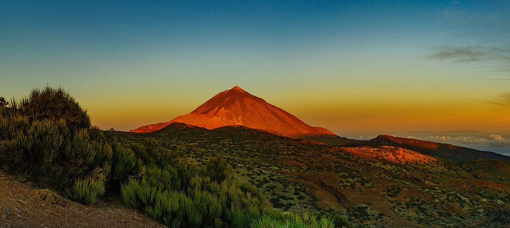 your dream business canary islands
