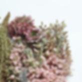 Flowers_edited_edited_edited.jpg