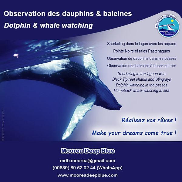 Moorea baleine whale watching swim