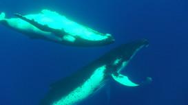 observation cetace