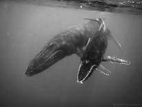 Moorea 2020 baleine
