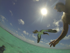 Moorea-dolphin