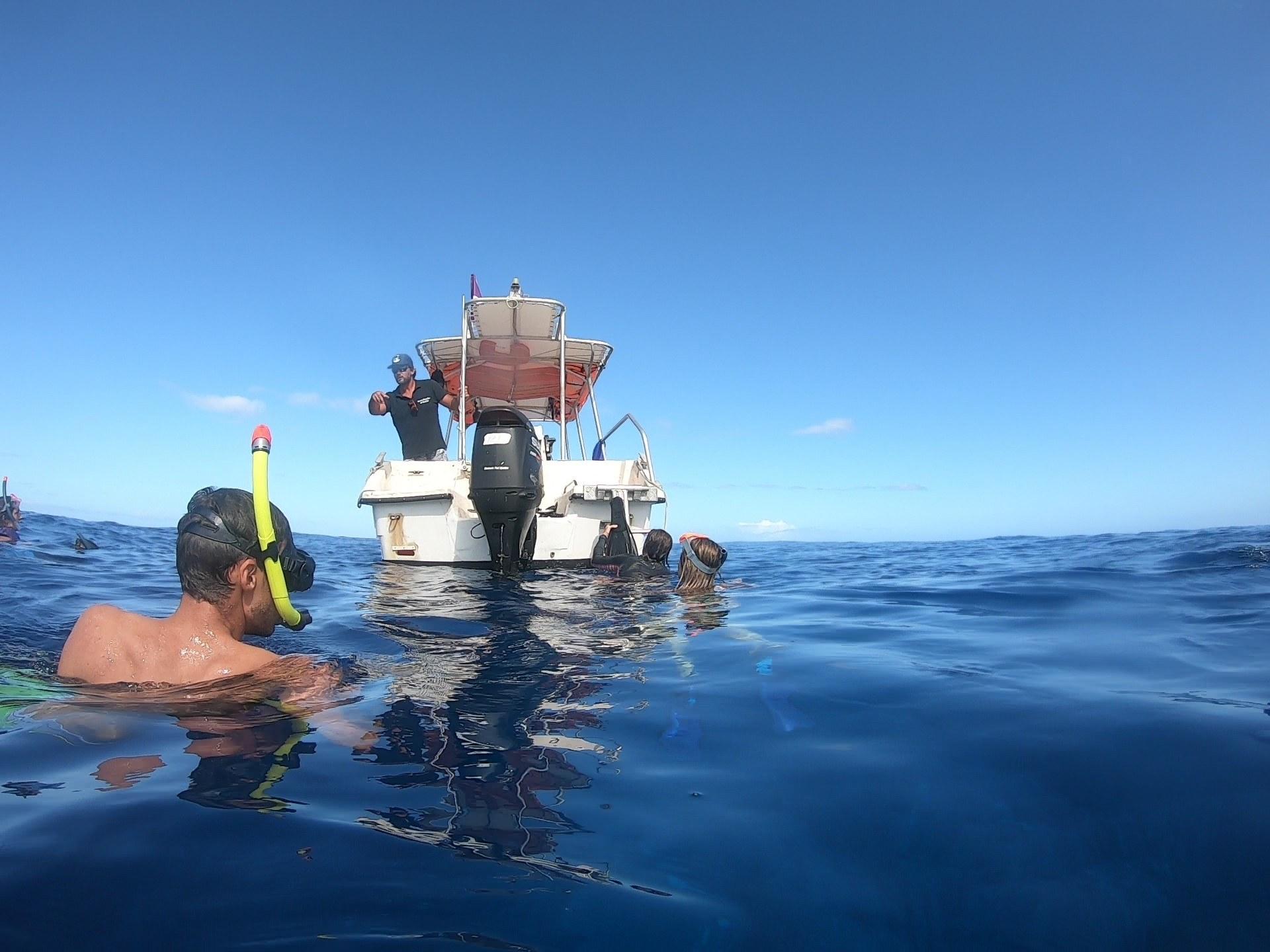 Moorea Deep Blue Whale Baleine