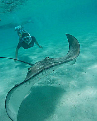 snorkeling Moorea