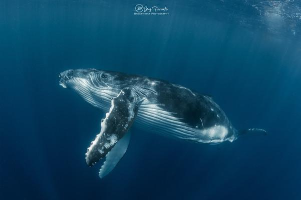 Observation des baleine