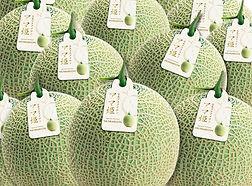 Musk Melons.jpg