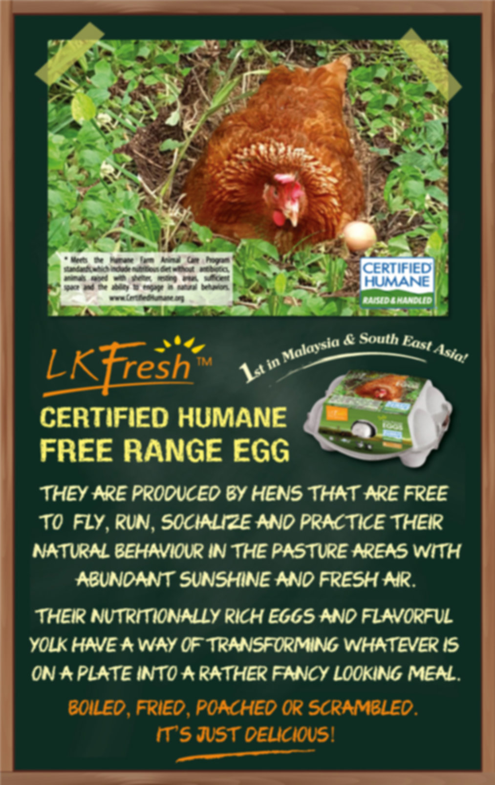 12x19-Free-Range-Eggs-Poster(Website).jp