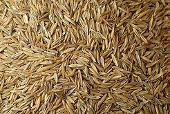 grass seed.jpg