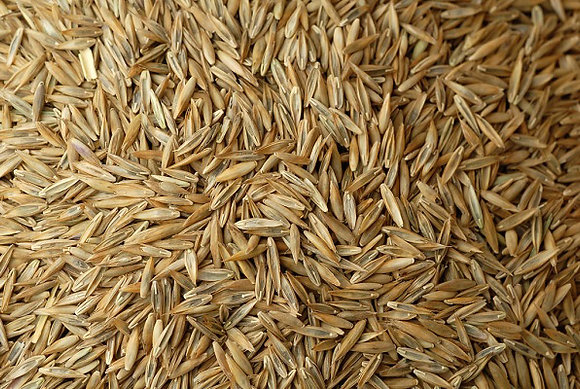 Grass Seed Sun/Shade Mix
