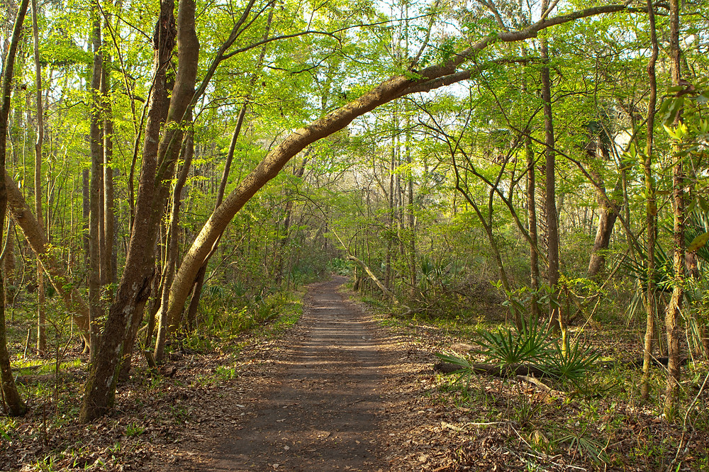 Nature trails with greenery.