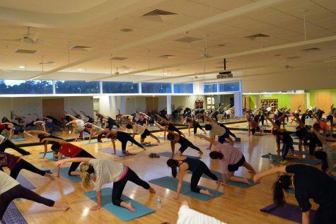 A yoga class of everyone doing the same pose.