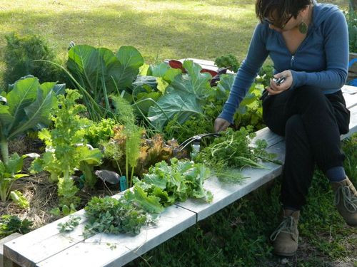 A women pulling weeds or picking greens from the garden and placing them on the bench.