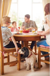 A family at a dinner table and a little boy feeding his dog under the table.