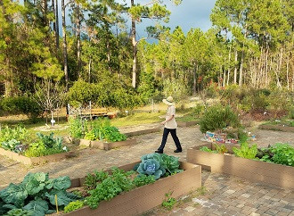 UNF's ogier gardens.