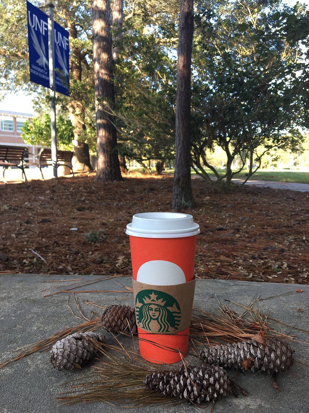 A cup of to go coffee on the ground with pine cones.