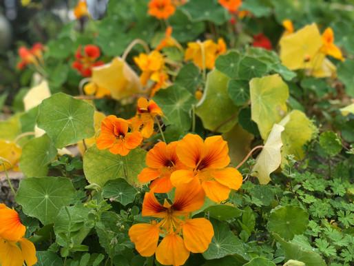 A little taste of the Ogier Gardens