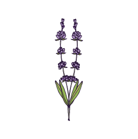Lavender_icon.png