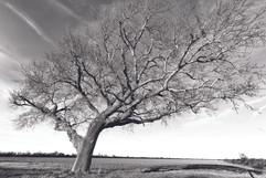 arbre de l'estuaire