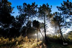 Forêt du matin