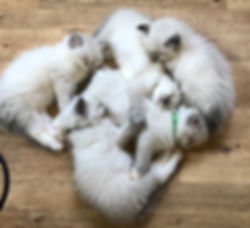Circle of kittens.JPG