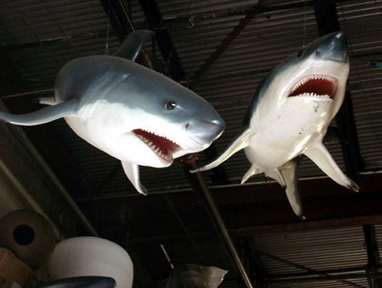 3D Sharks.jpg