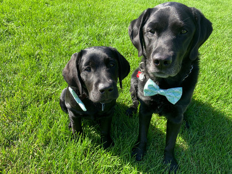 Low-Waste Pet Care