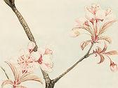 桜スケッチ