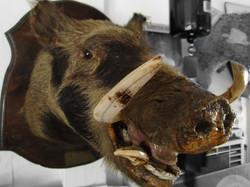 Boars Head - $300