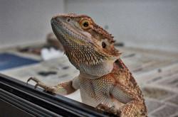 Reptiles Reptropolis