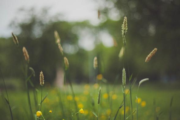 Flowering%20grass%20up%20close_edited.jpg