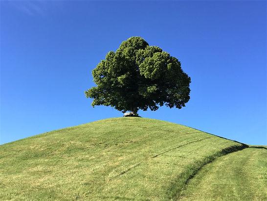 Der Baum Karin Ledermann Unterwegs Campe
