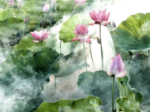 Über Geisteszustände und die Lotusblüte