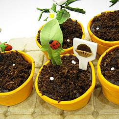 Strawberry Seedlings (in edible pots)