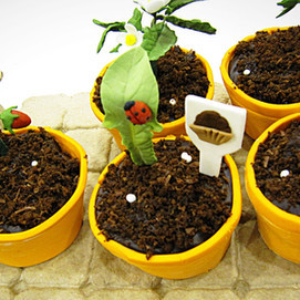 Strawberry Seedlings (in edible pots)