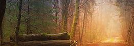 autumn-3193305_1280.jpg