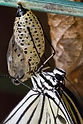 butterfly-2897268_960_720.jpg