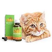 NHV w cat.jpg