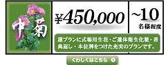 中菊.jpg
