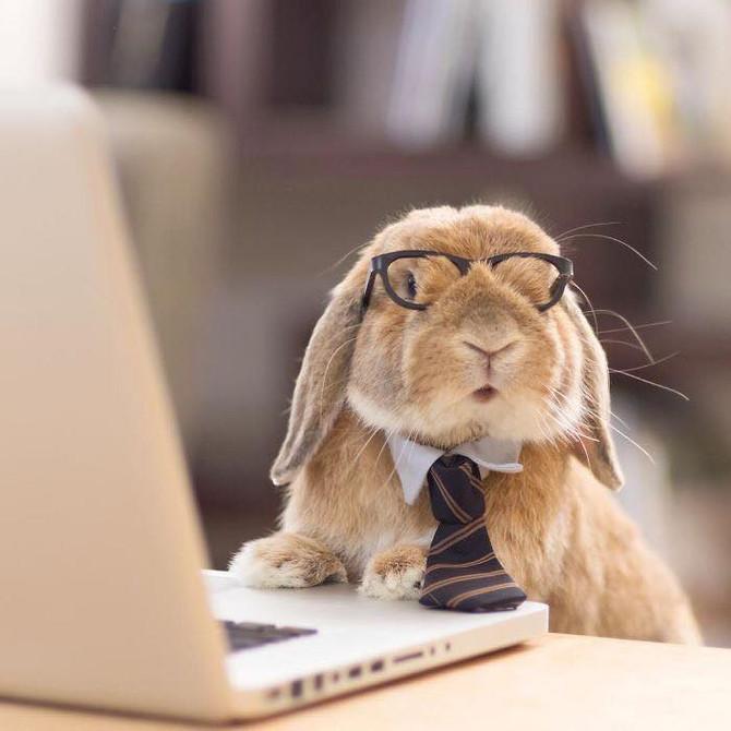 Une pensée pour les lapins... à Pâques.