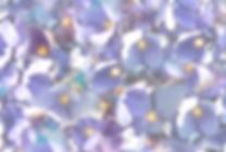Website Hydrangea.png