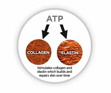 ATP_Production.webp